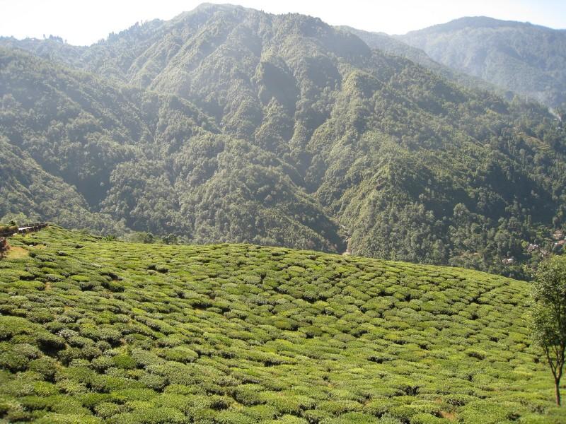 Foto mit Hügeln und Büschen